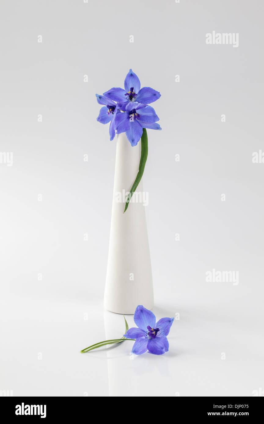 Blue delphiniums in white vase - Stock Image