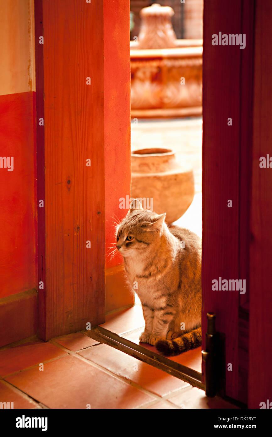 Cat sitting in sunny doorway - Stock Image