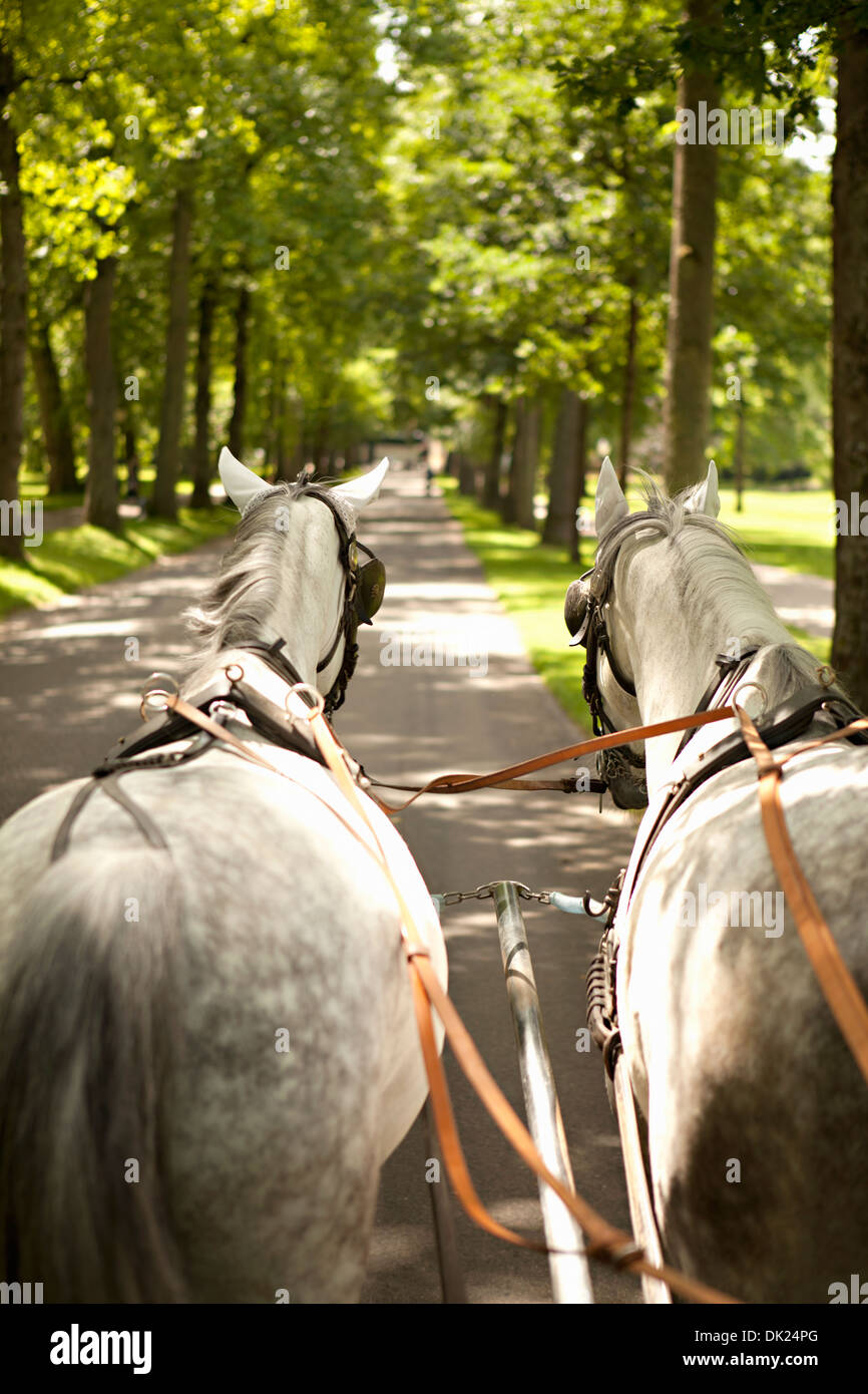 Horse drawn carriage moving along treelined lane, Lichtentaler Allee, Baden-Baden, Germany - Stock Image