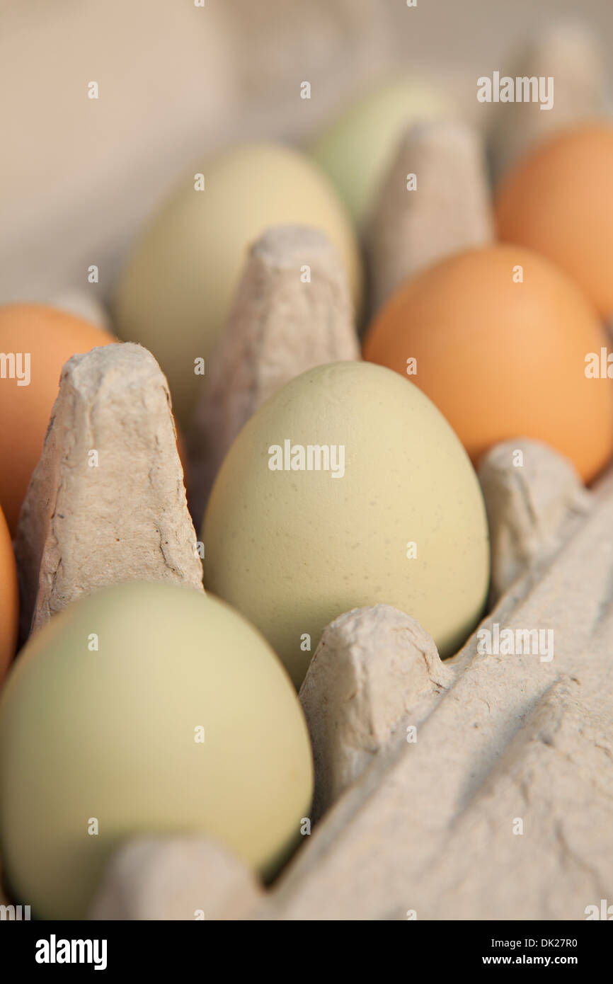 Close up full frame of green and brown organic eggs in carton - Stock Image