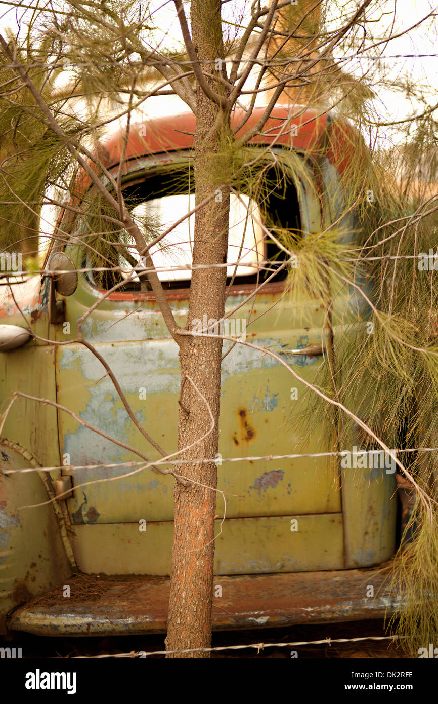 Rusted green abandoned truck behind tree - Stock Image