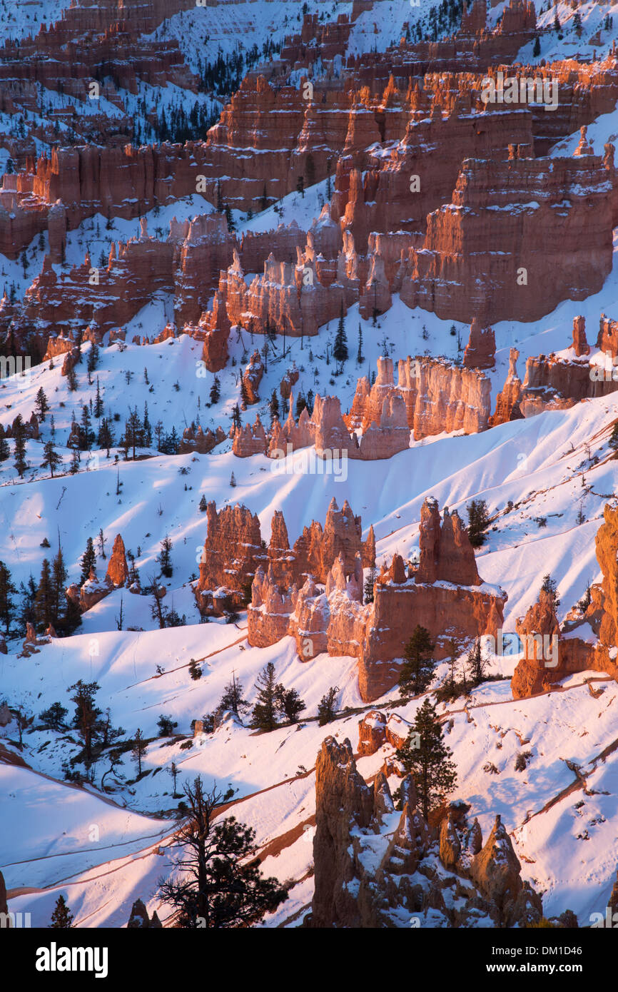 the hoodoos in winter, Bryce Canyon, Utah, USA - Stock Image