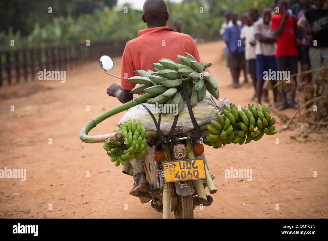 Bananas on the back of a motorcycle near Kampala, Uganda. - Stock Image
