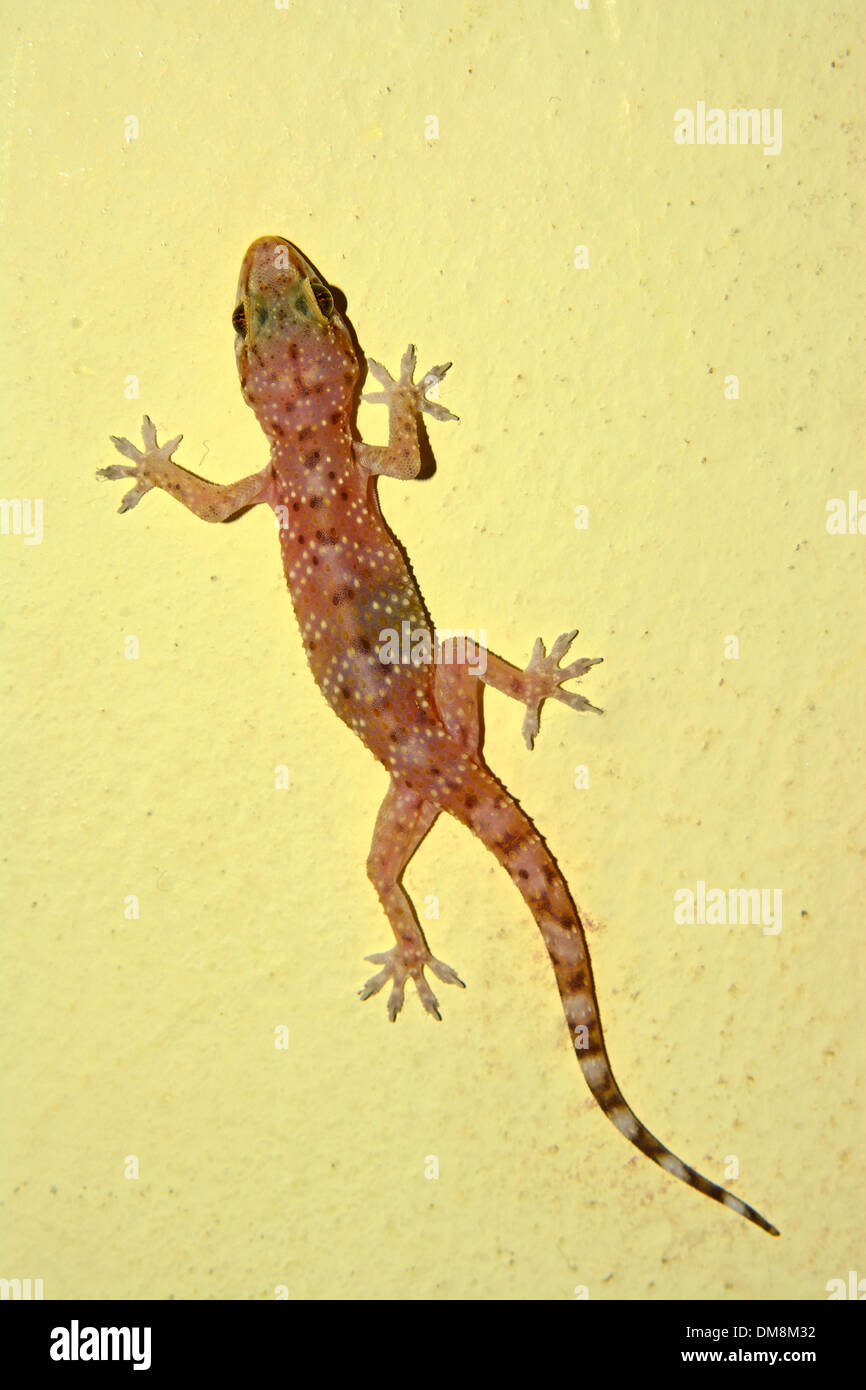 Awesome Gecko Outdoor Wall Decor Images - The Wall Art Decorations ...