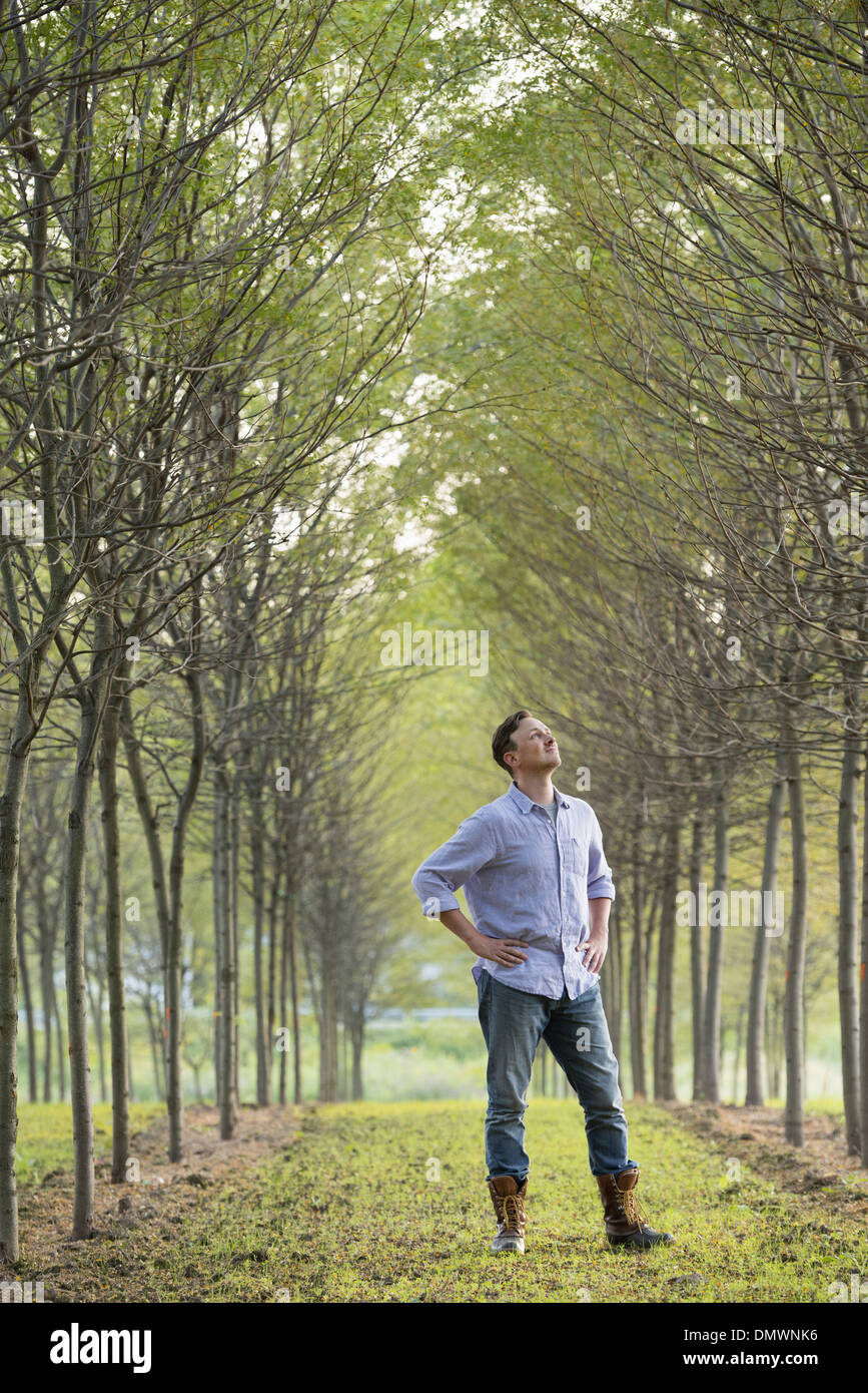 A man  in an avenue of trees looking upwards. - Stock Image