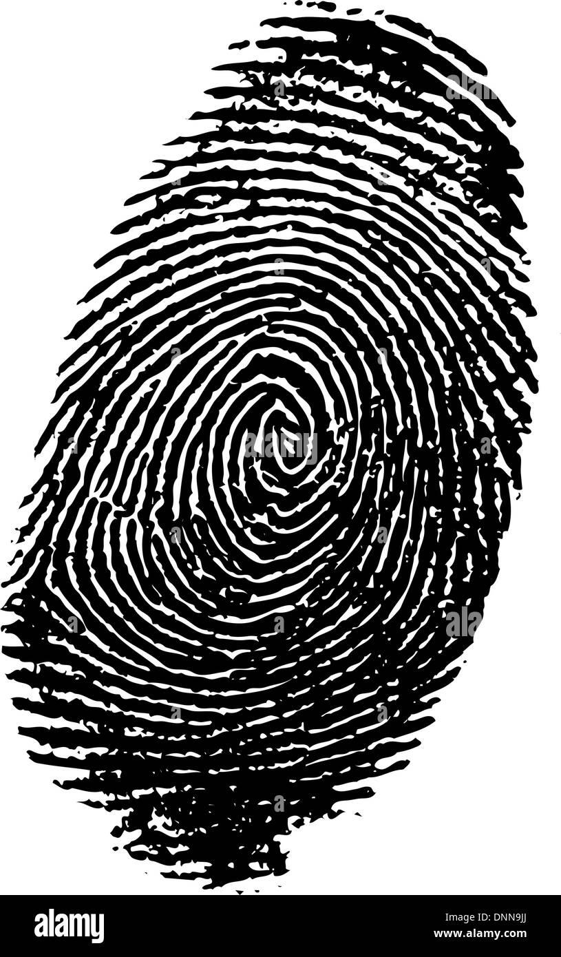 Detailed fingerprint - Stock Image