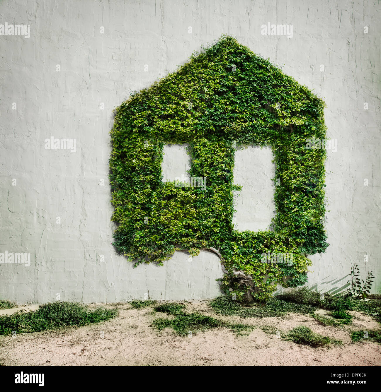 Ivy growing in shape of house - Stock Image