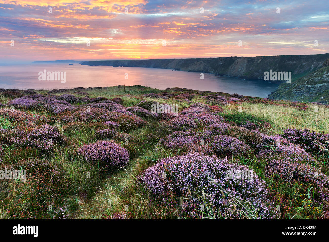Heather growing on the clifftop at North Cliffs with the sun beginning to rise above the distant coastline - Stock Image