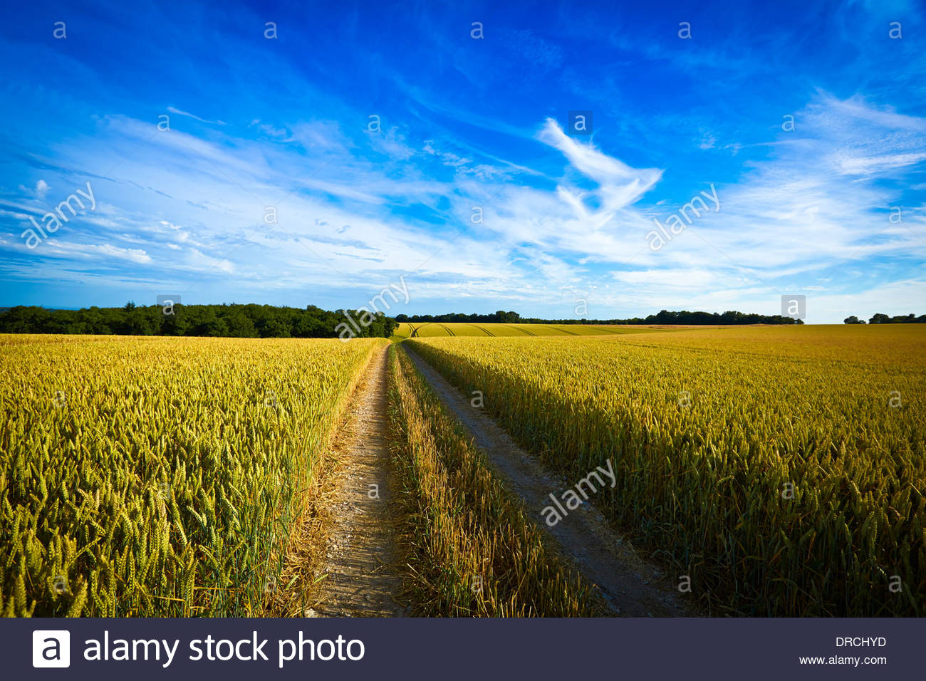 Dirt road in wheat field - Stock Image