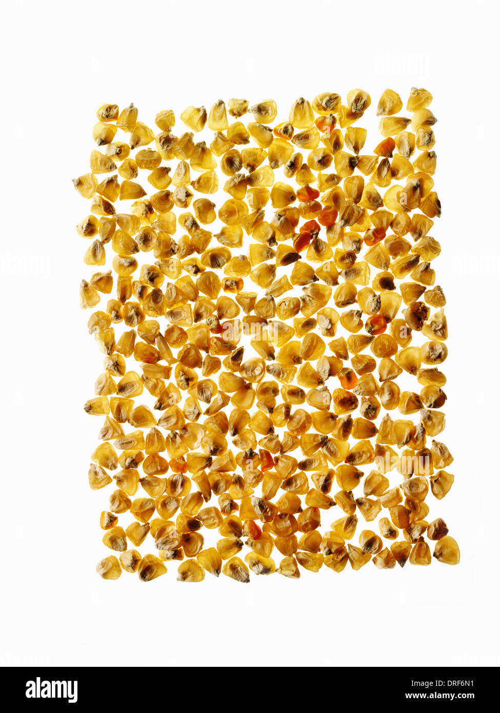group of corn maize kernels arranged in pattern - Stock Image