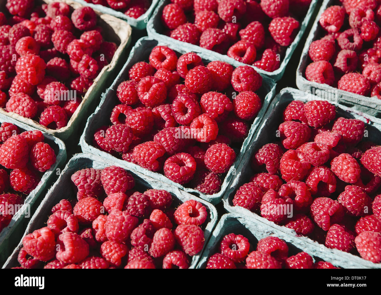 Seattle Washington USA Boxes of organic raspberries farmers market stall - Stock Image