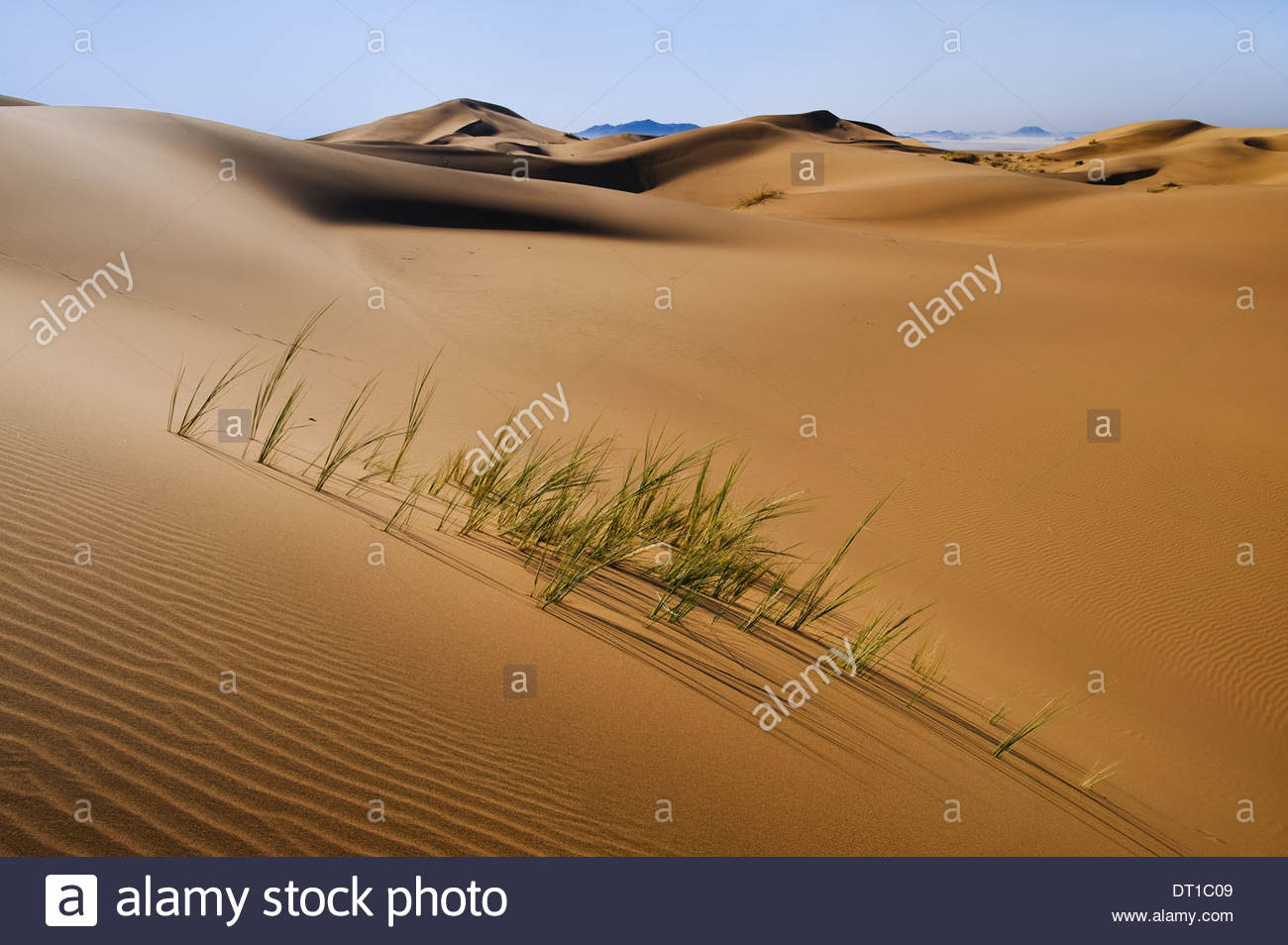 Namib-Naukluft National Park Namibia Grasses in sand dunes Namib-Naukluft National Park - Stock Image