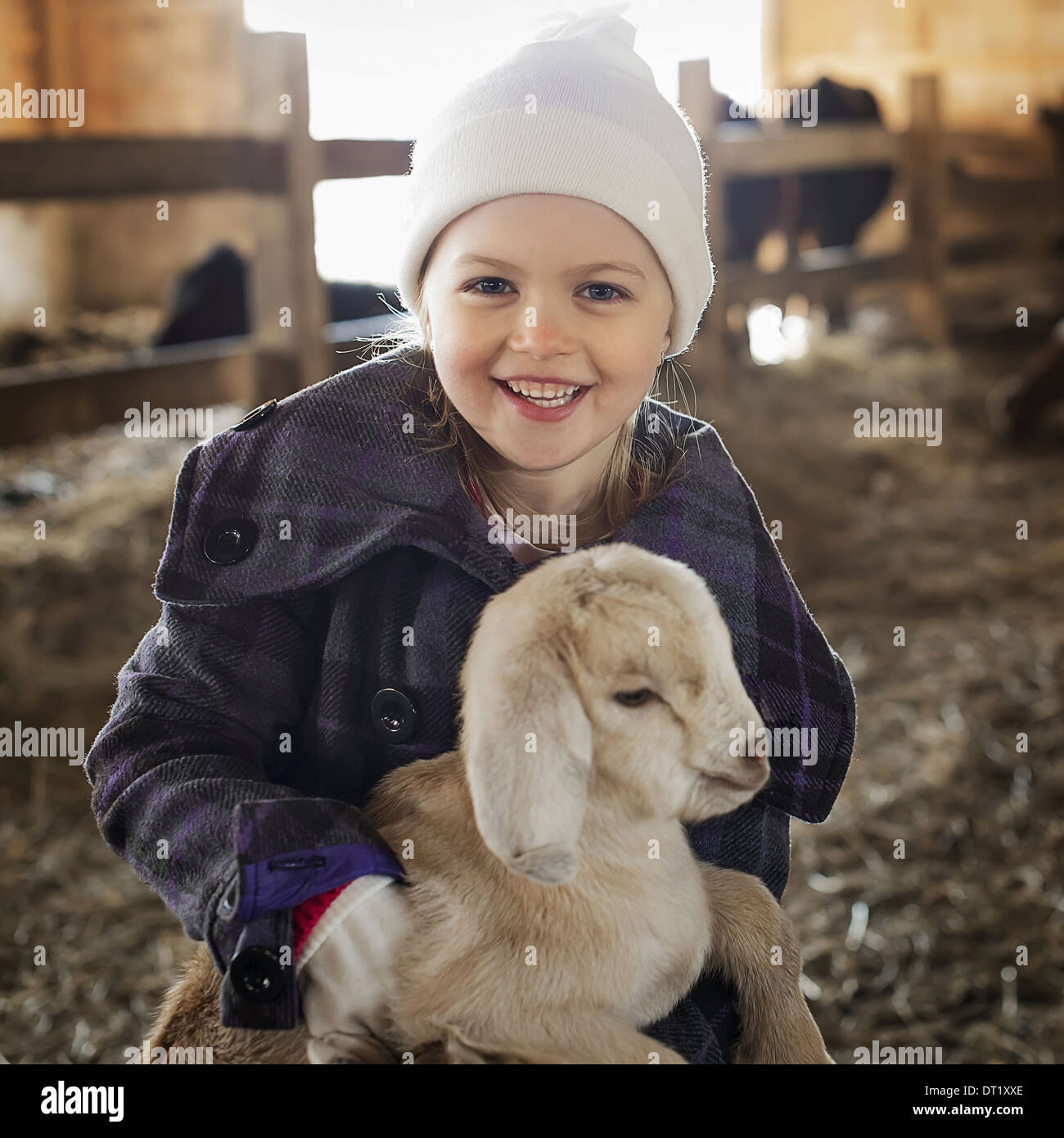 A child in the animal shed holding and stroking a baby goat - Stock Image