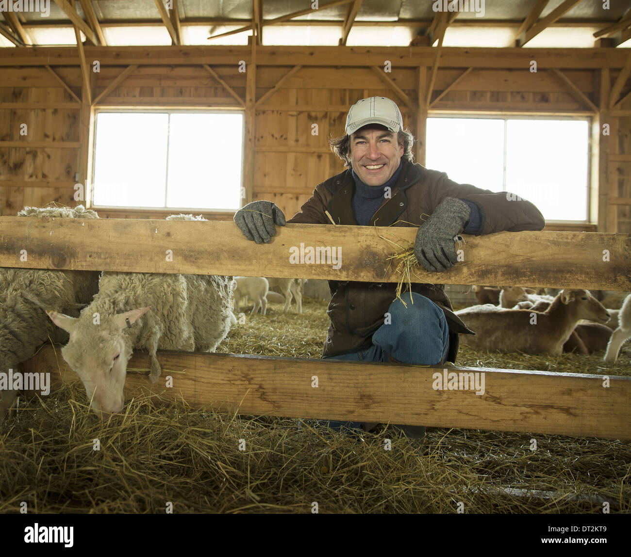 An Organic Farm in Winter in Cold Spring New York State A family working caring for the livestock Farmer and sheep - Stock Image