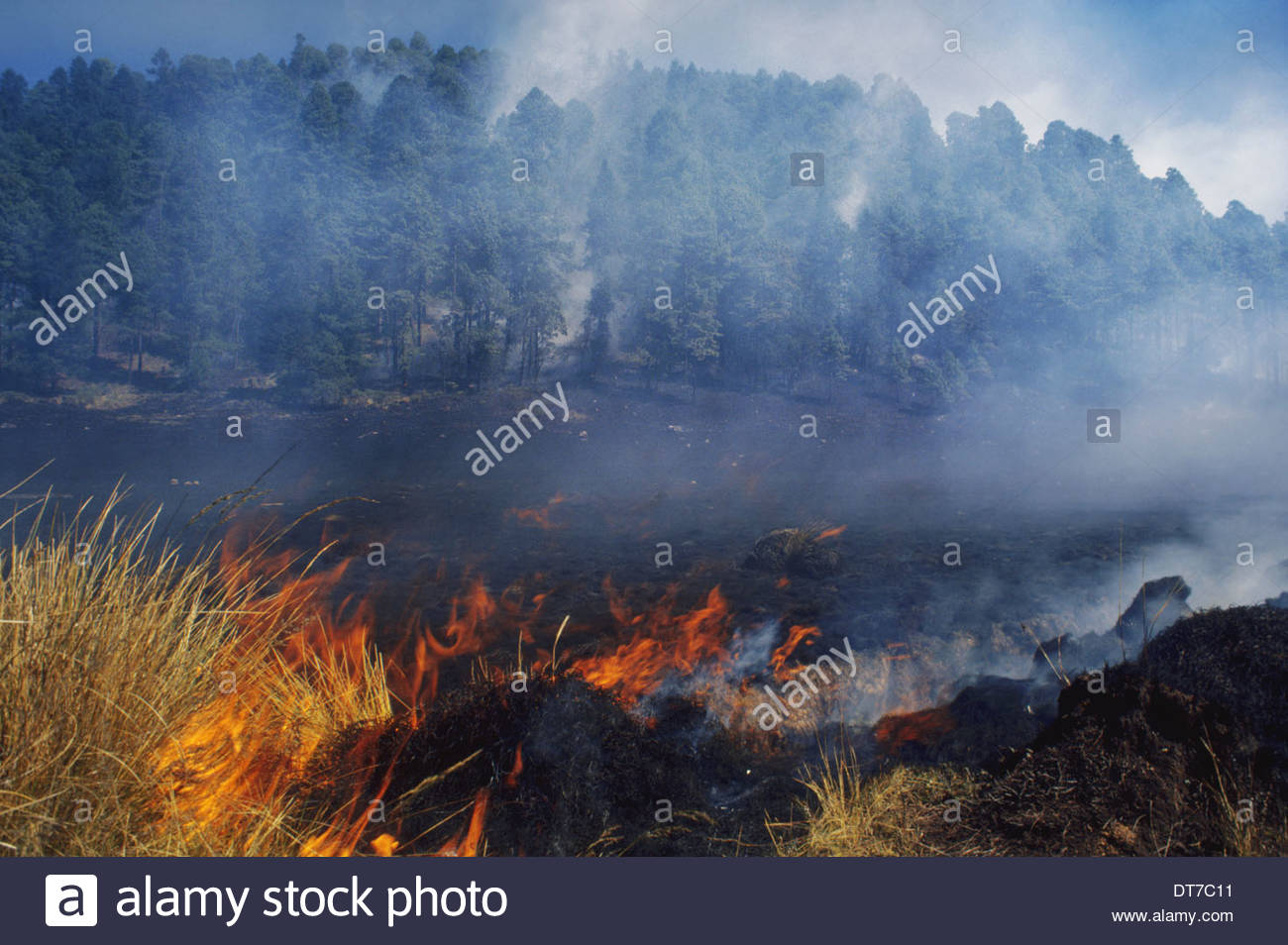 Forest fire near monarch butterfly wintering site Michoacan Mexico Michoacan Mexico - Stock Image