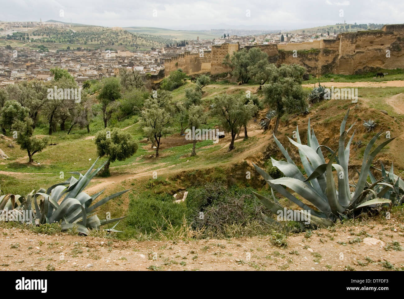 MOROCCO; FERTILE LANDSCAPE NR. BHALIL Stock Photo