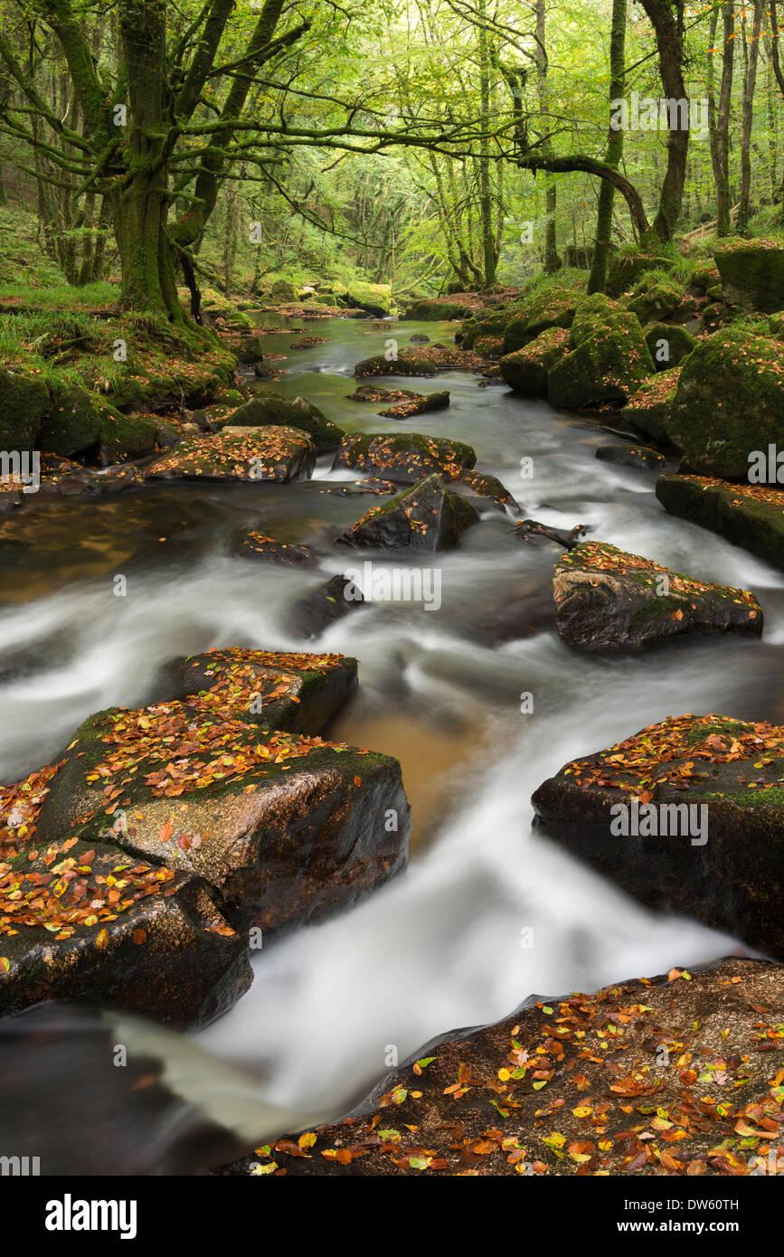 River Fowey tumbling through rocks at Golitha Falls, Cornwall, England. Autumn (September) 2013. - Stock Image
