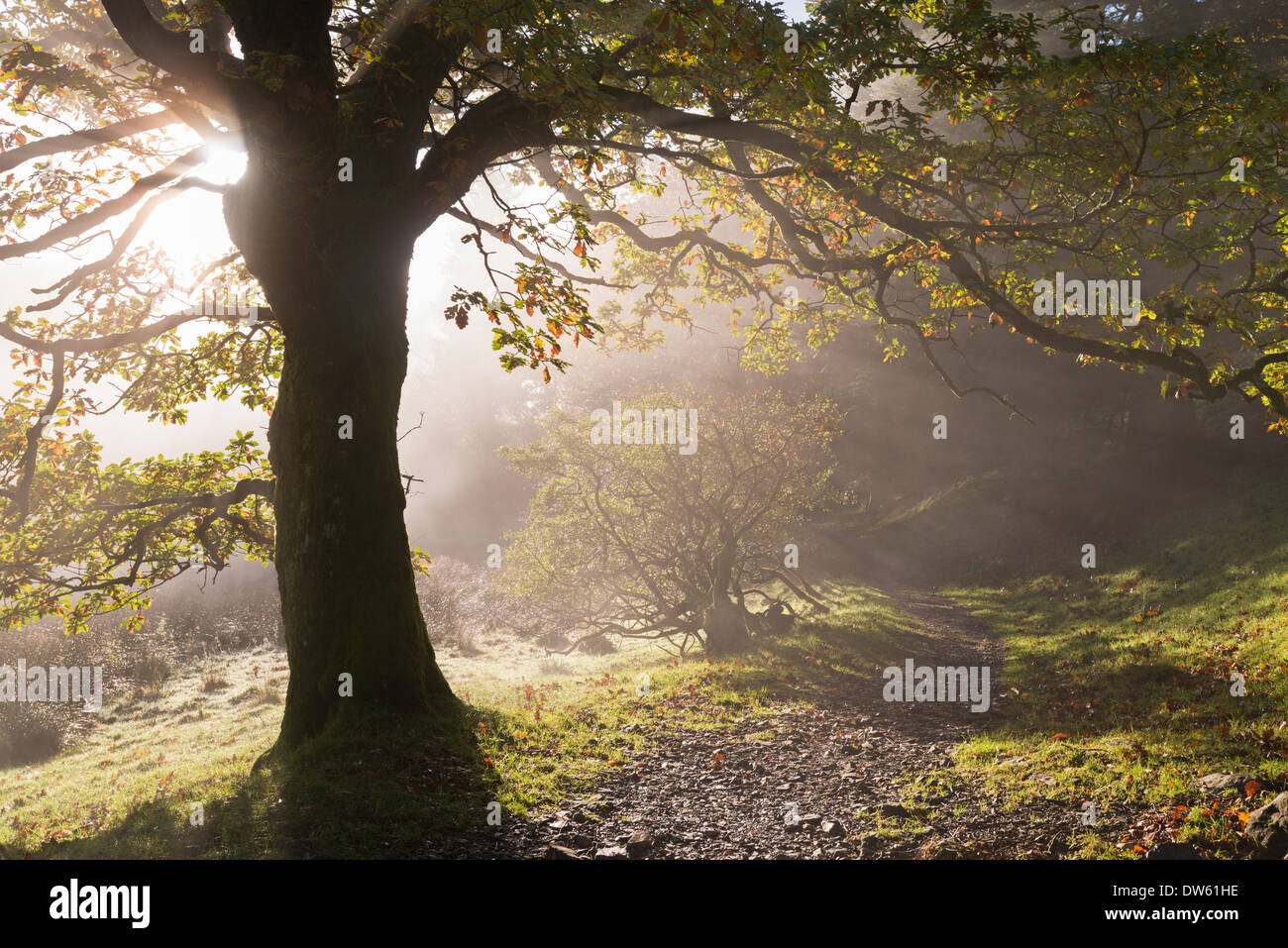 Winding Lake District footpath through Holme Wood, Loweswater, Cumbria, England. Autumn (November) 2013. - Stock Image