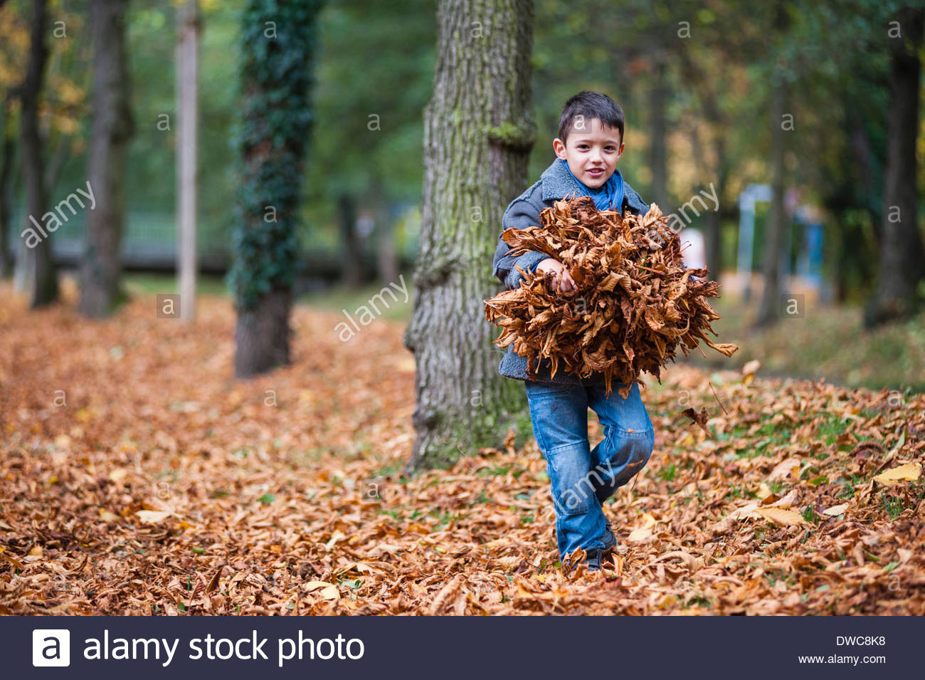 Young boy carrying bundle of autumn leaves in park - Stock Image