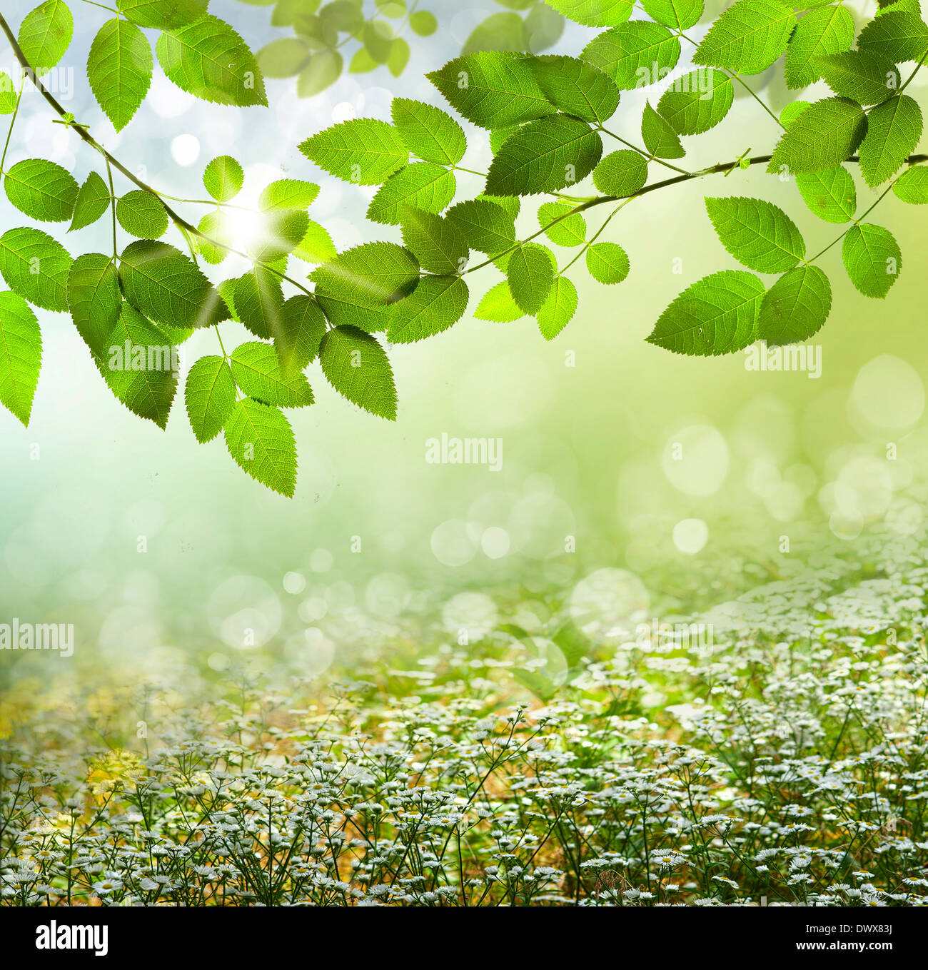 spring or summer season abstract nature background with grass and