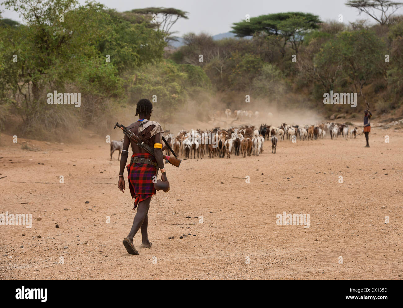 Hamer man safeguarding his goats near Turmi in the Omo Valley, Ethiopia - Stock Image