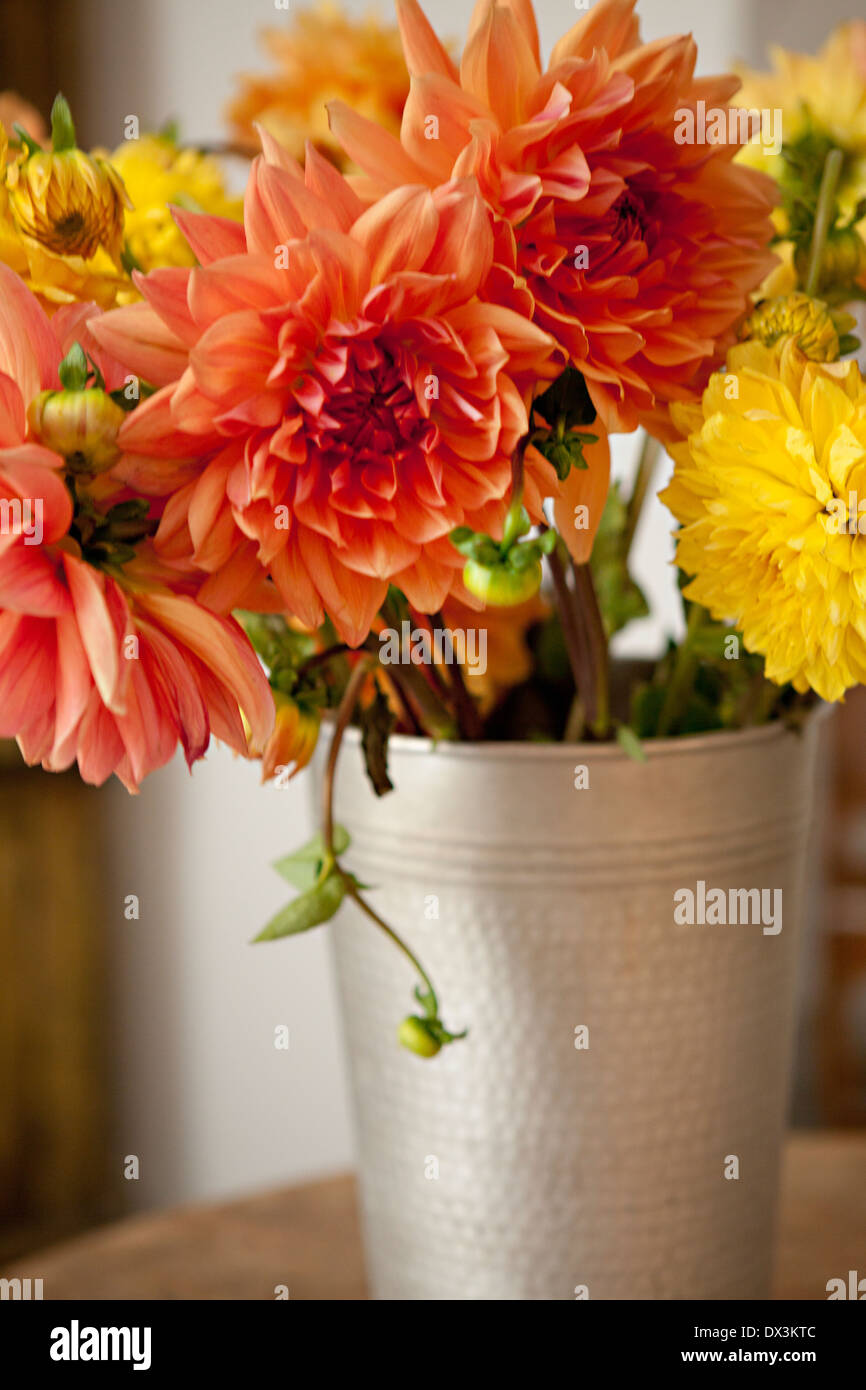 Orange and yellow dahlia bouquet in silver bucket - Stock Image