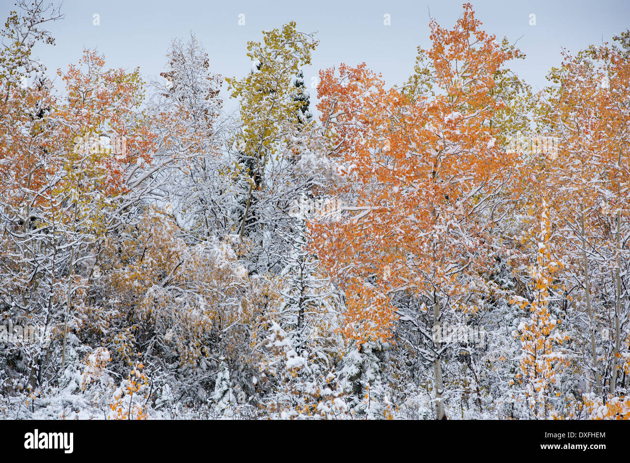 Early snow and autumn colours on the Silver Trail nr Mayo, Yukon Territories, Canada - Stock Image