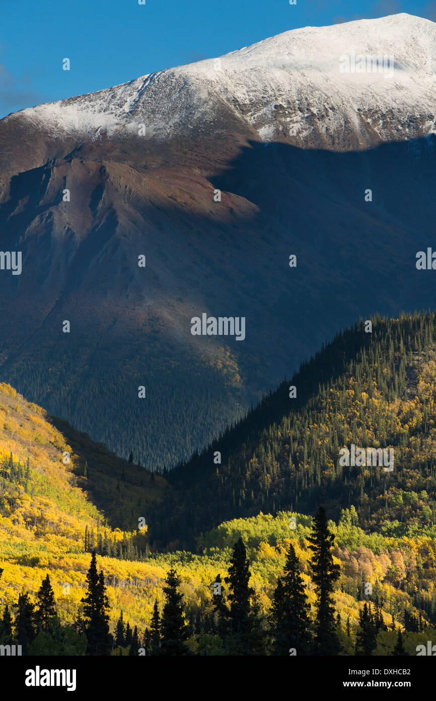 autumn colours along the South Klondike Highway and a shadow resembling the head of a wolf on Young Peak British - Stock Image