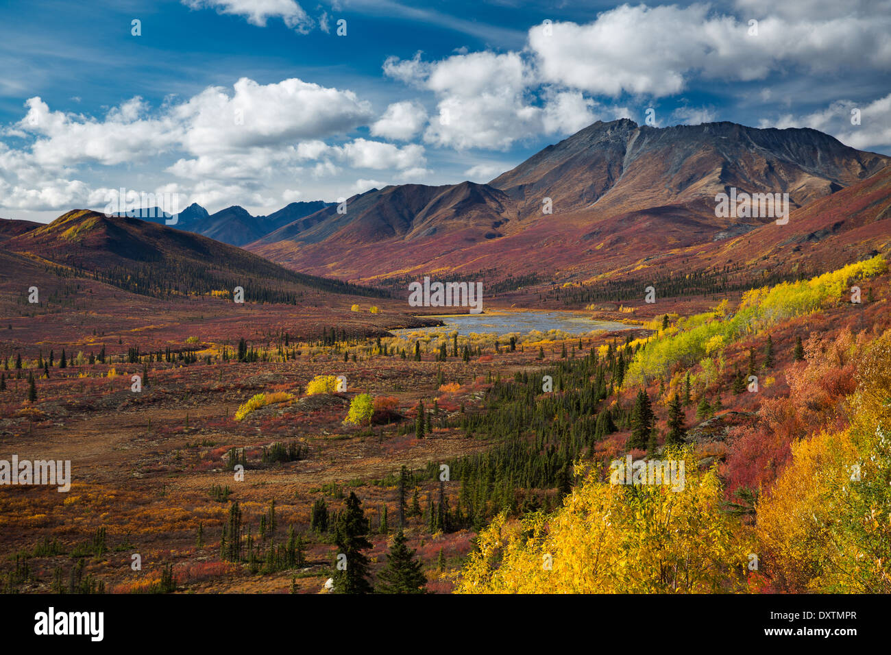 Autumn colours and Cathedral Mountain, Tombstone Territorial Park, Yukon Territories, Canada - Stock Image