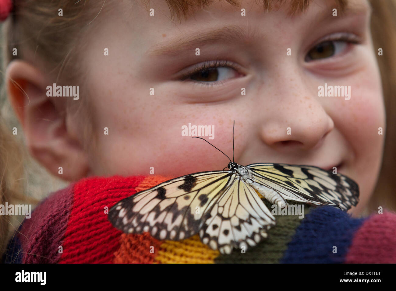 London, UK . 31st Mar, 2014.  Kids play with Butterflies at the Natural History Museum to launch Sensational Butterflies - Stock Image