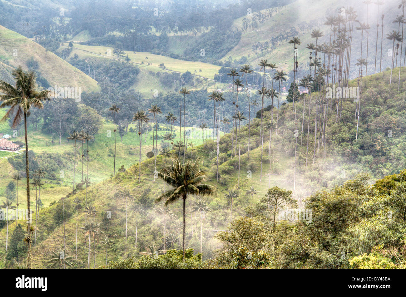 The valley of Cocora near Salento, Colombia - Stock Image