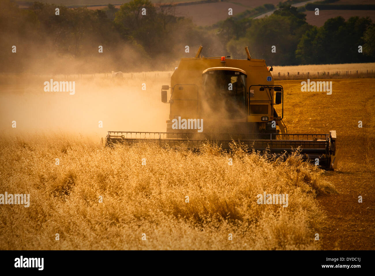 A combine harvester creates a dust cloud. - Stock Image