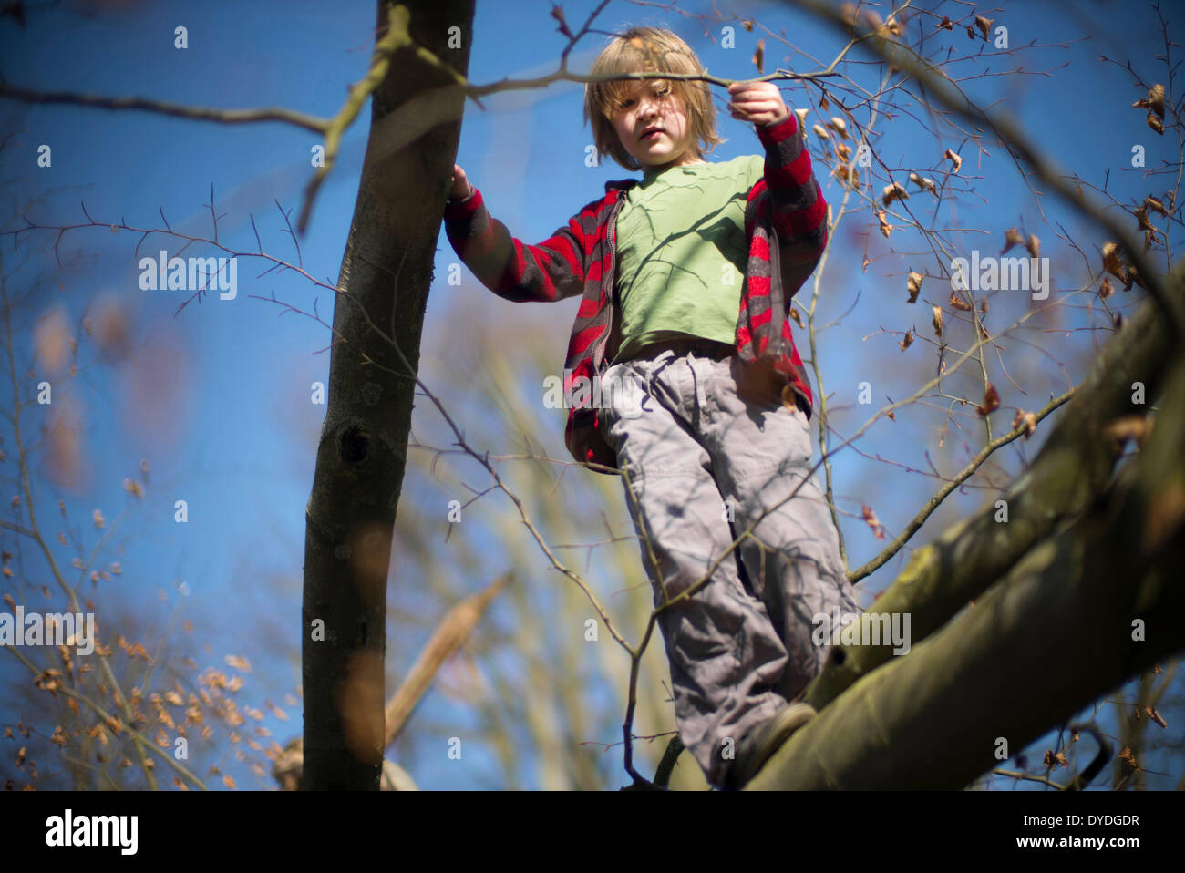 Seven year old boy climbing a tree. - Stock Image