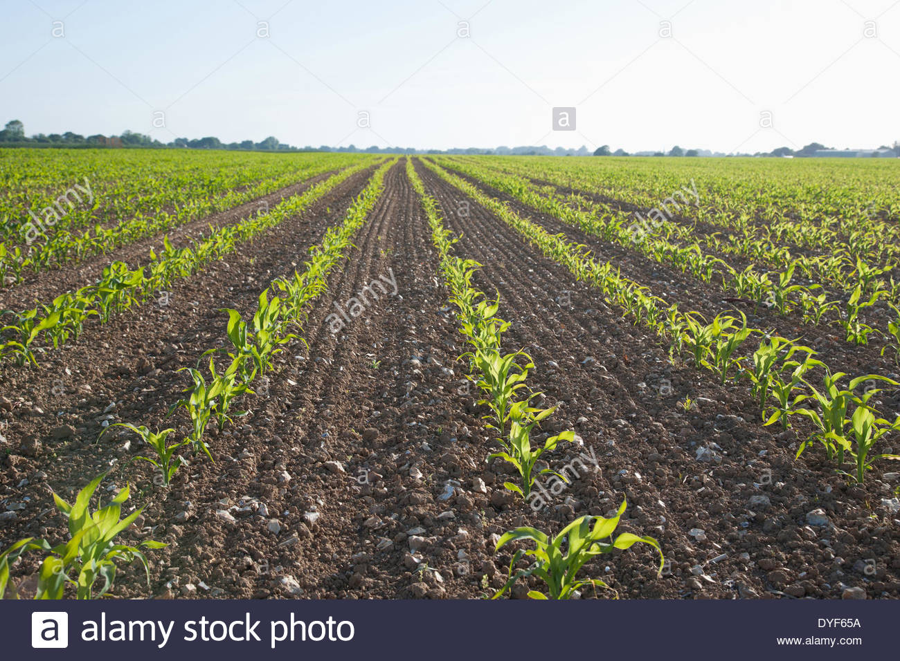 Plants growing in field - Stock Image