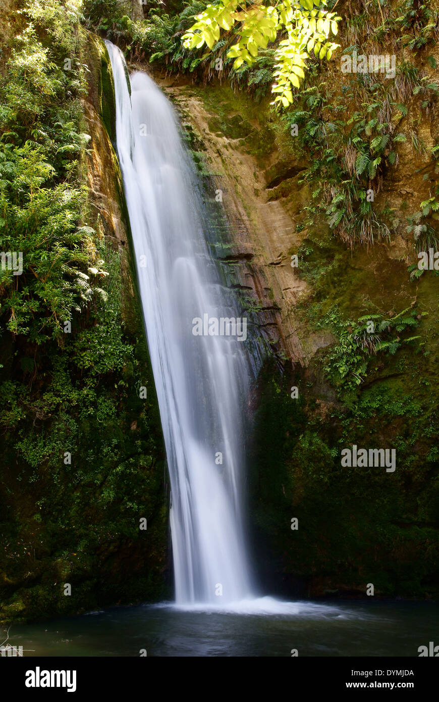 Te Ana Falls in the Tangoio Forest reserve on the North Island in Hawkes Bay New Zealand Stock Photo