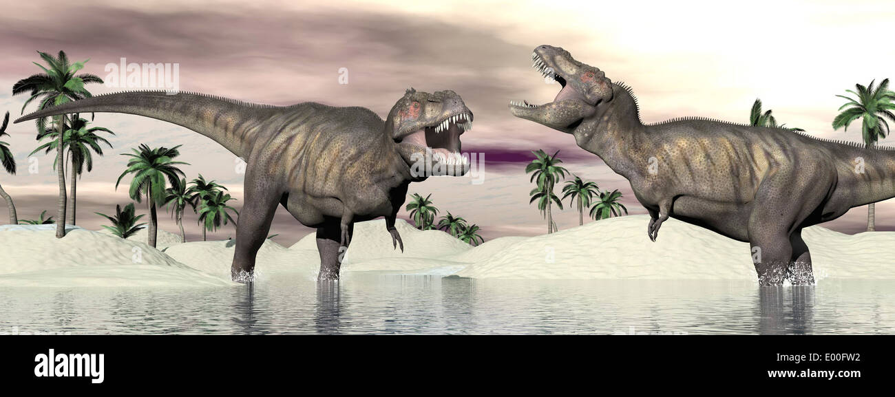 two tyrannosaurus rex dinosaurs fighting in the water stock photo