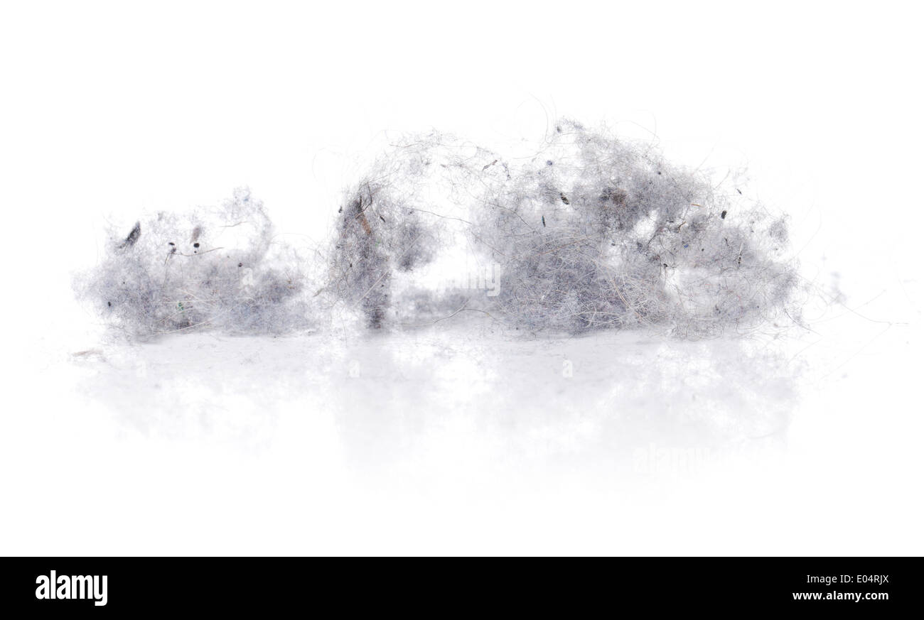 Dust bunnies on white reflecting background. - Stock Image