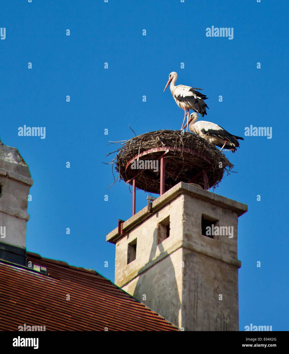Rust neusiedlersee störche  Two storks in the nest in Rust, Austria, Zwei Stoerche im Nest in ...