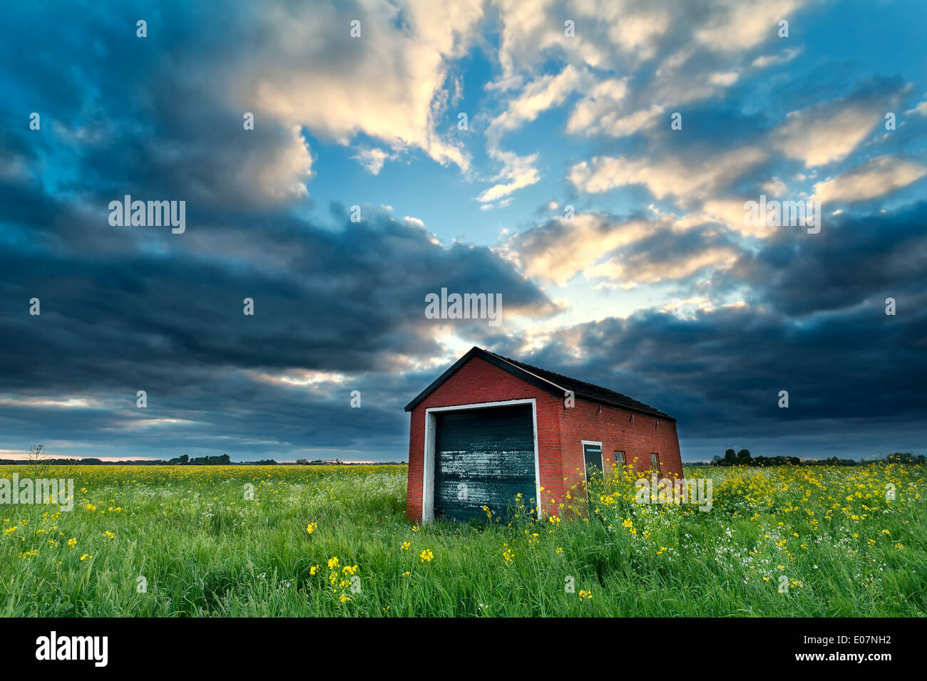 farmhouse on rapeseed field at stormy sunset, Netherlands - Stock Image