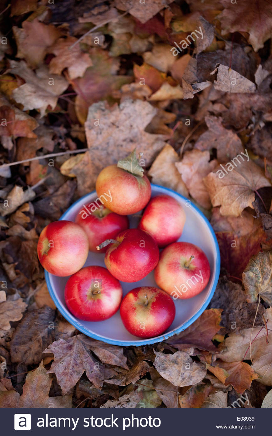 Directly above shot of bowl full of apples - Stock Image