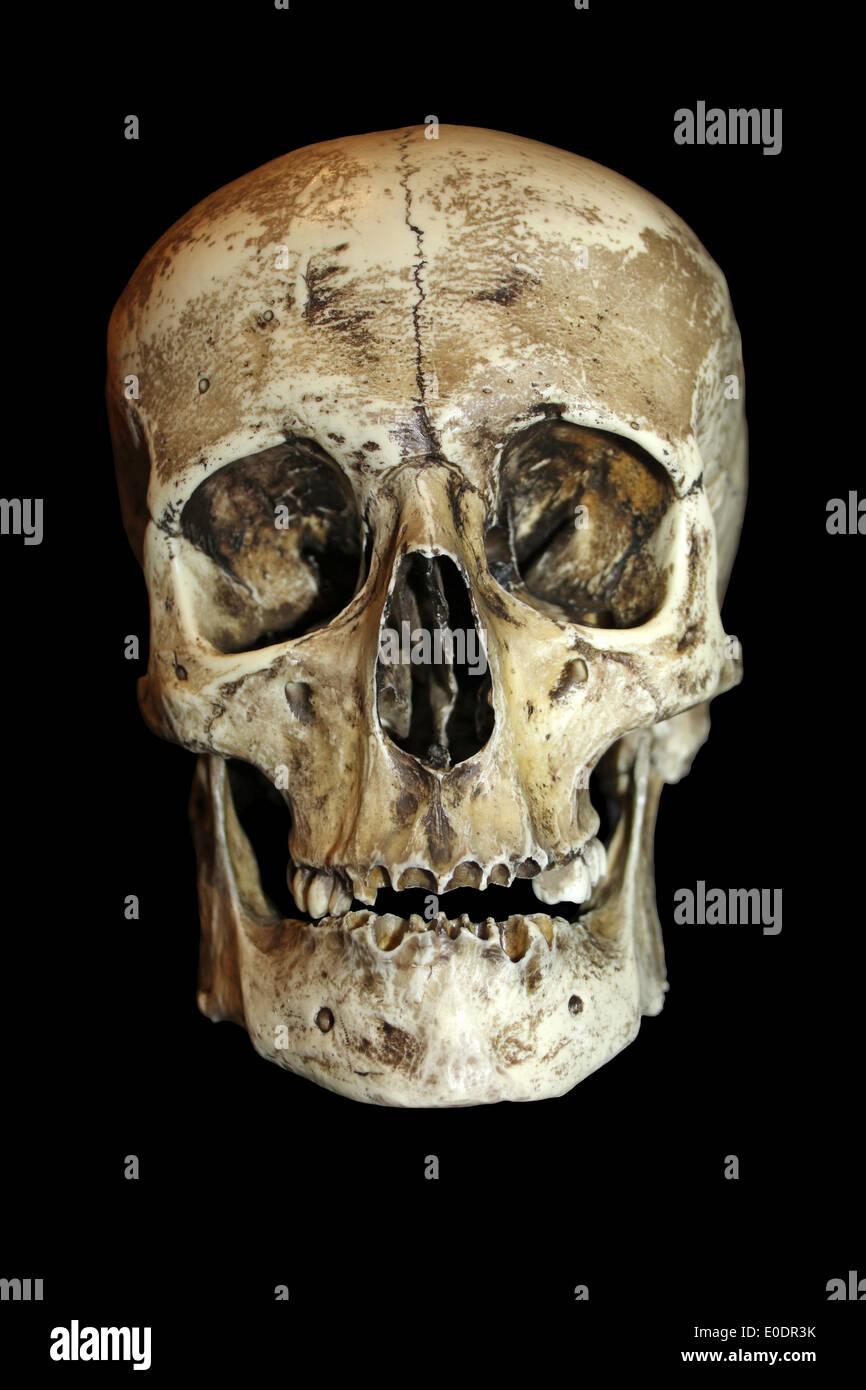 Roman Gladiator Human Skull Front View Stock Photo 69144983 Alamy