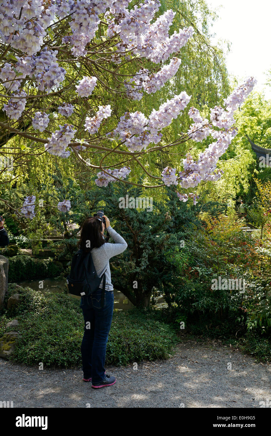 woman-photographing-pink-cherry-blossoms