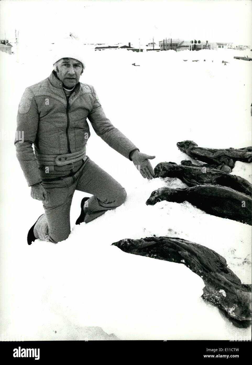 Mar. 03, 1977 - Journalist Expedition to Canadian Seal Hunt: The Weber Foundation, charted by Swiss law in 1975, - Stock Image