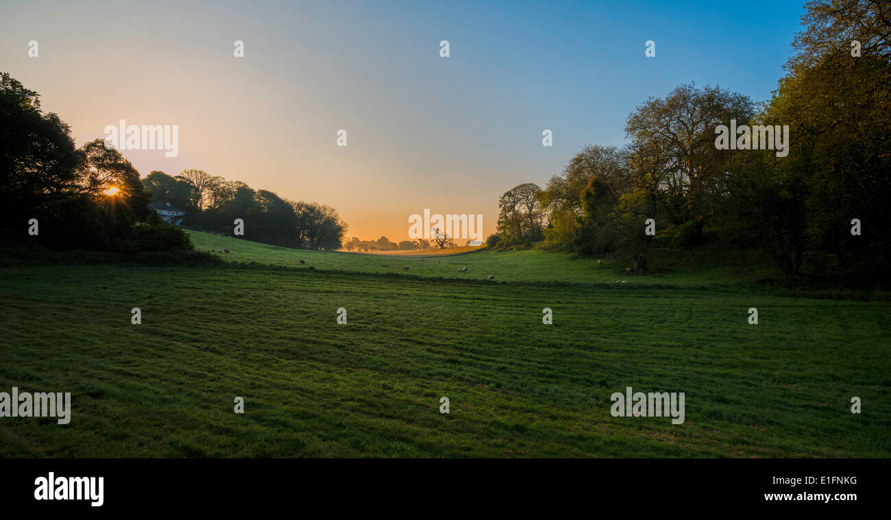 Countryside at dawn in Devon. Summertime. West of England England UK - Stock Image