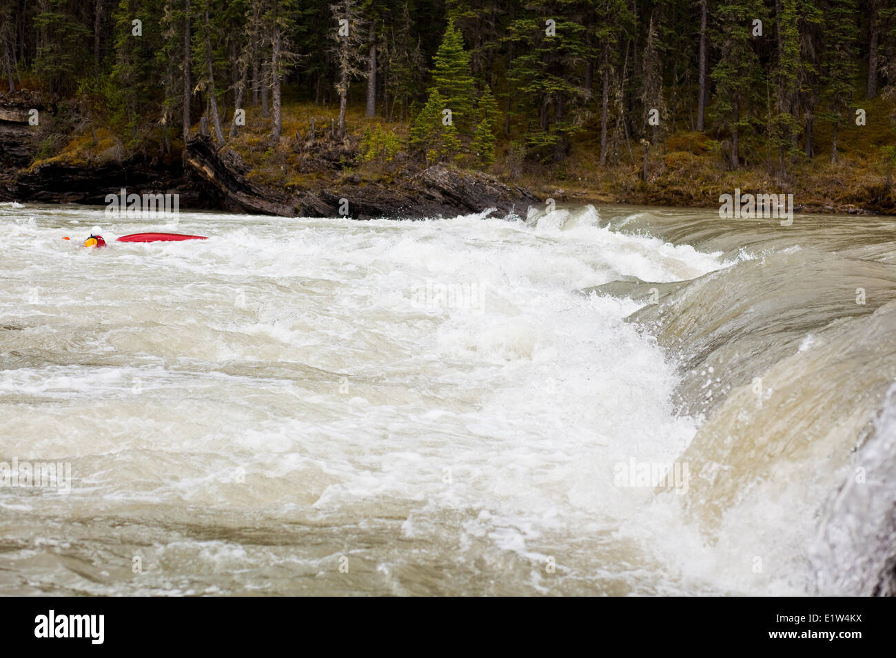A female kayaker swimming over a dangerous rapid on the Red Deer River, AB - Stock Image