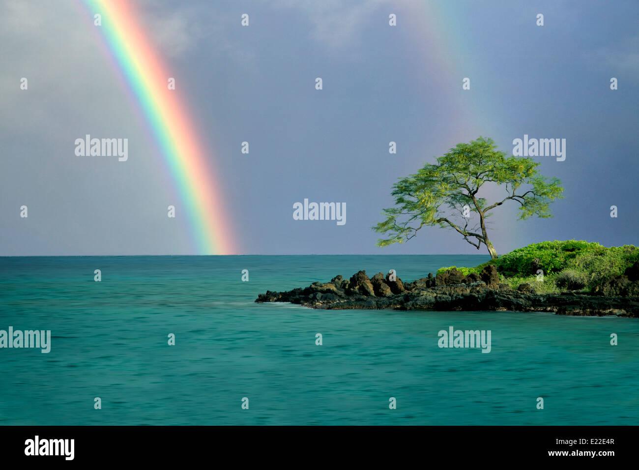 Lone tree and rainbow. Maui, Hawaii - Stock Image