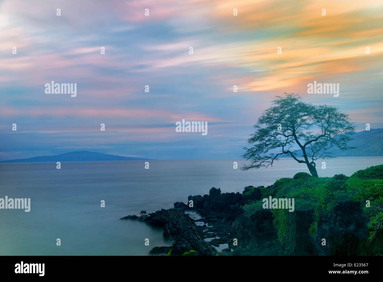 Lone tree and sunset. Maui, Hawaii - Stock Image