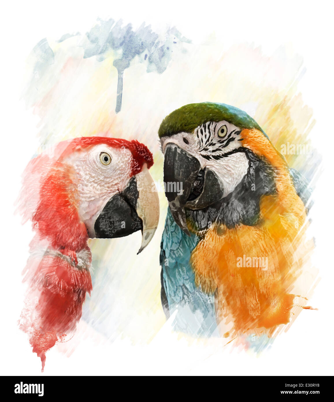 Watercolor Digital Painting Of Two Colorful Parrots - Stock Image