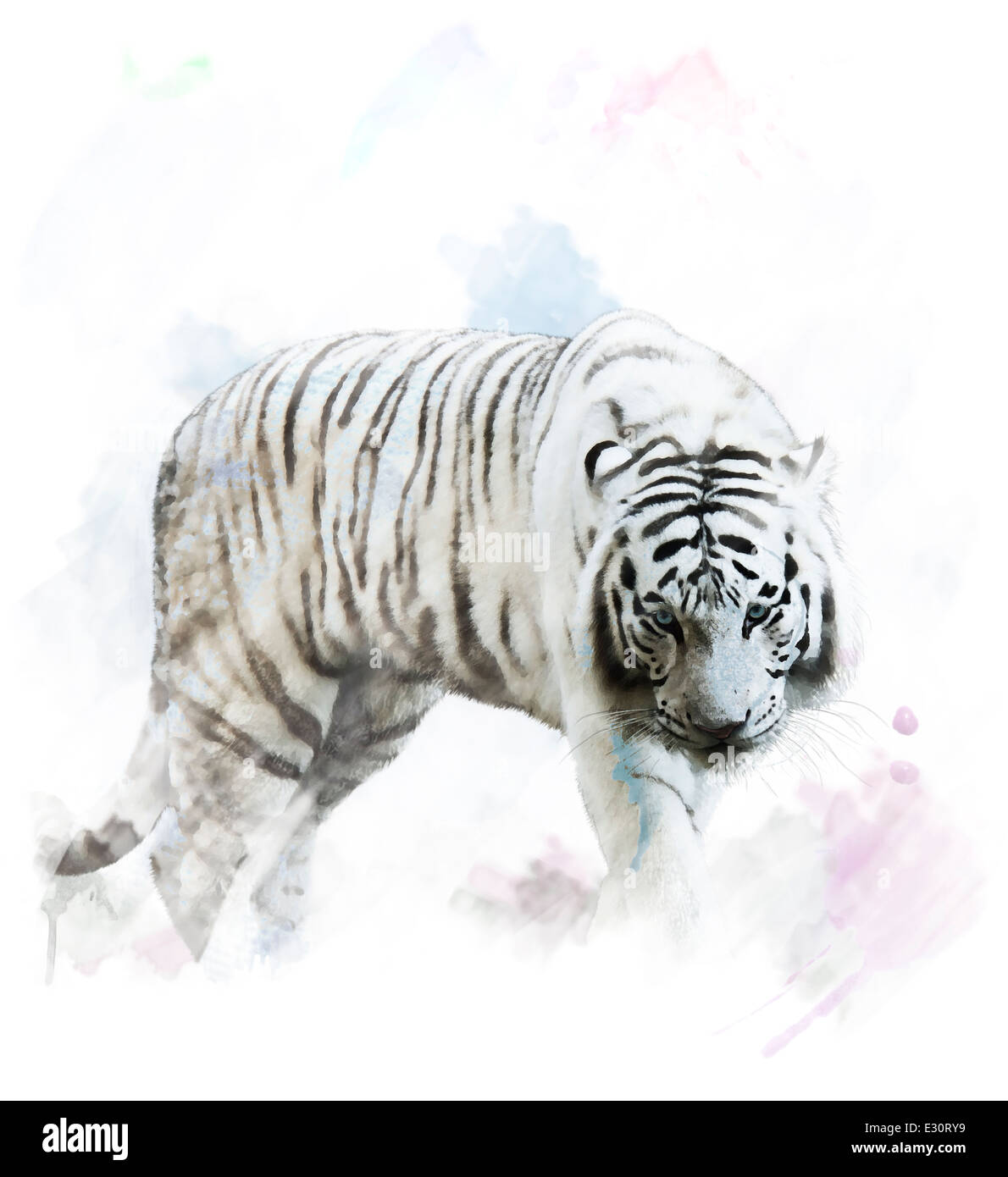 Watercolor Digital Painting Of White Tiger Portrait - Stock Image
