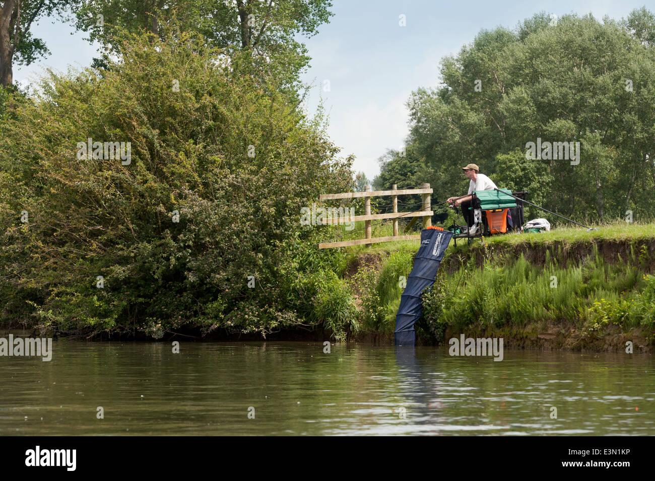 Angler angling, the River Thames at Wallingford, Oxfordshire England UK - Stock Image